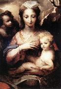 BECCAFUMI, Domenico Madonna with the Infant Christ and St John the Baptist  gfgf oil painting picture wholesale