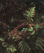 Fidelia Bridges Bird\'s Nest and Ferns oil painting picture wholesale