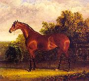 John F Herring Negotiator, the Bay Horse in a Landscape oil painting picture wholesale