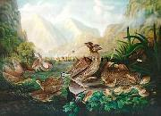 Robert Havell Jr Prints Pinnated Grouse oil painting picture wholesale
