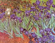 Vincent Van Gogh Irises oil painting picture wholesale