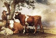 POTTER, Paulus Young Bull zg oil painting picture wholesale