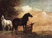POTTER, Paulus Horses in a Field zg oil painting picture wholesale