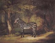 George Stubbs A Zebra oil painting picture wholesale