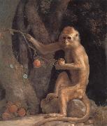 George Stubbs Monkey oil painting picture wholesale