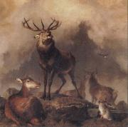 Sir Edwin Landseer A Majestic Gathering oil painting picture wholesale