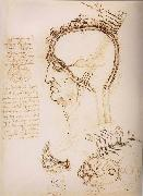 LEONARDO da Vinci Anatomical study of the brain and the scalp oil painting picture wholesale