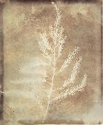 Willim Henry Fox Talbot Photogenetic Drawing oil painting picture wholesale