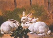 unknow artist Rabbit 072 oil painting reproduction