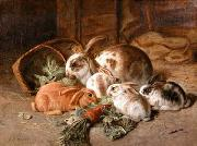 unknow artist Rabbits 135 oil painting reproduction