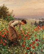 Daniel Ridgeway Knight Girl Picking Poppies oil painting picture wholesale