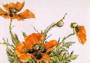 Demuth, Charles Poppies oil painting picture wholesale