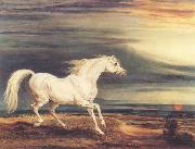 James Ward Napoleon's Horse,Marengo at Waterloo oil painting picture wholesale