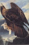 John James Audubon Golden Eagle oil painting picture wholesale