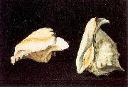Napoletano, Filippo Two Shells oil painting artist