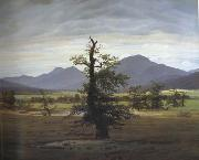 Caspar David Friedrich Landscape with Solitary Tree (mk10) oil painting picture wholesale