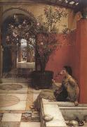 Alma-Tadema, Sir Lawrence An Oleander (mk23) oil painting picture wholesale