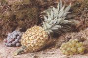 John Sherrin A Pineapple and Grapes on a mossy Bank (mk37) oil painting artist