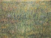 Vincent Van Gogh Pasture in Bloom (nn04) oil painting picture wholesale