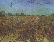 Vincent Van Gogh The Green Vineyard (nn04) oil painting picture wholesale