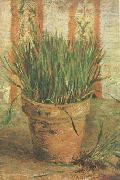 Vincent Van Gogh Flowerpot with Chives (nn04) oil painting picture wholesale
