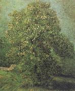 Vincent Van Gogh Chestnut Tree in Blosson (nn04) oil painting picture wholesale