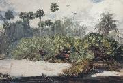 Winslow Homer In a Florida Jungle (mk44) oil painting picture wholesale