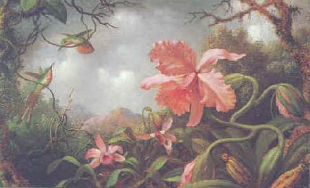 Martin Johnson Heade Hummingbirds and Two Varieties of Orchids France oil painting art