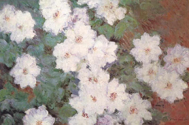 Claude Monet Clematis oil painting picture