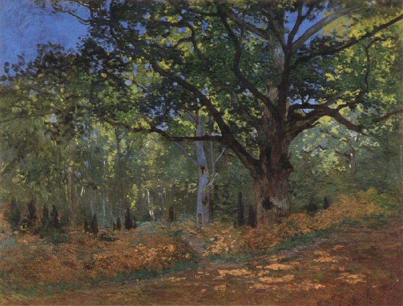 Claude Monet The Bodmer Oak,Forest of Fontainebleau oil painting picture