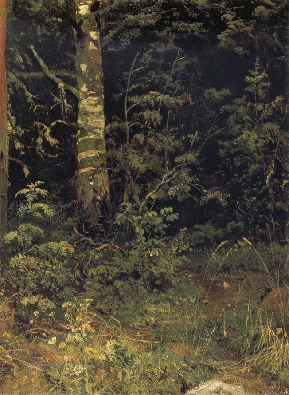 Ivan Shishkin Silver birch and mountain ash oil painting picture
