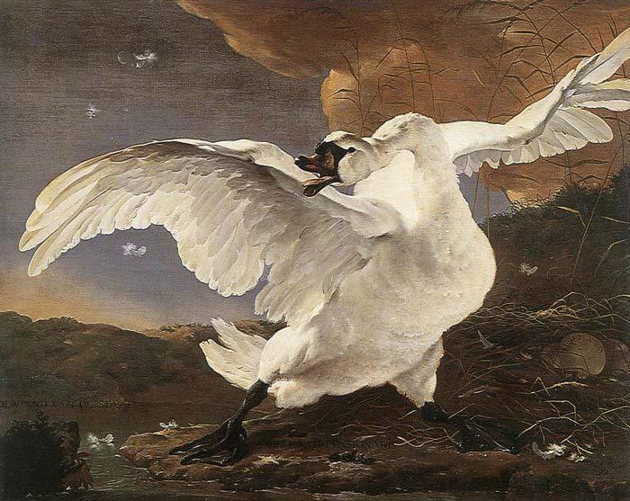 ASSELYN, Jan The Threatened Swan before 1652 oil painting image
