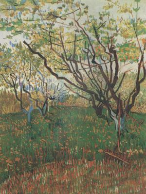 Vincent Van Gogh Orchard in Blosson (nn04) oil painting image